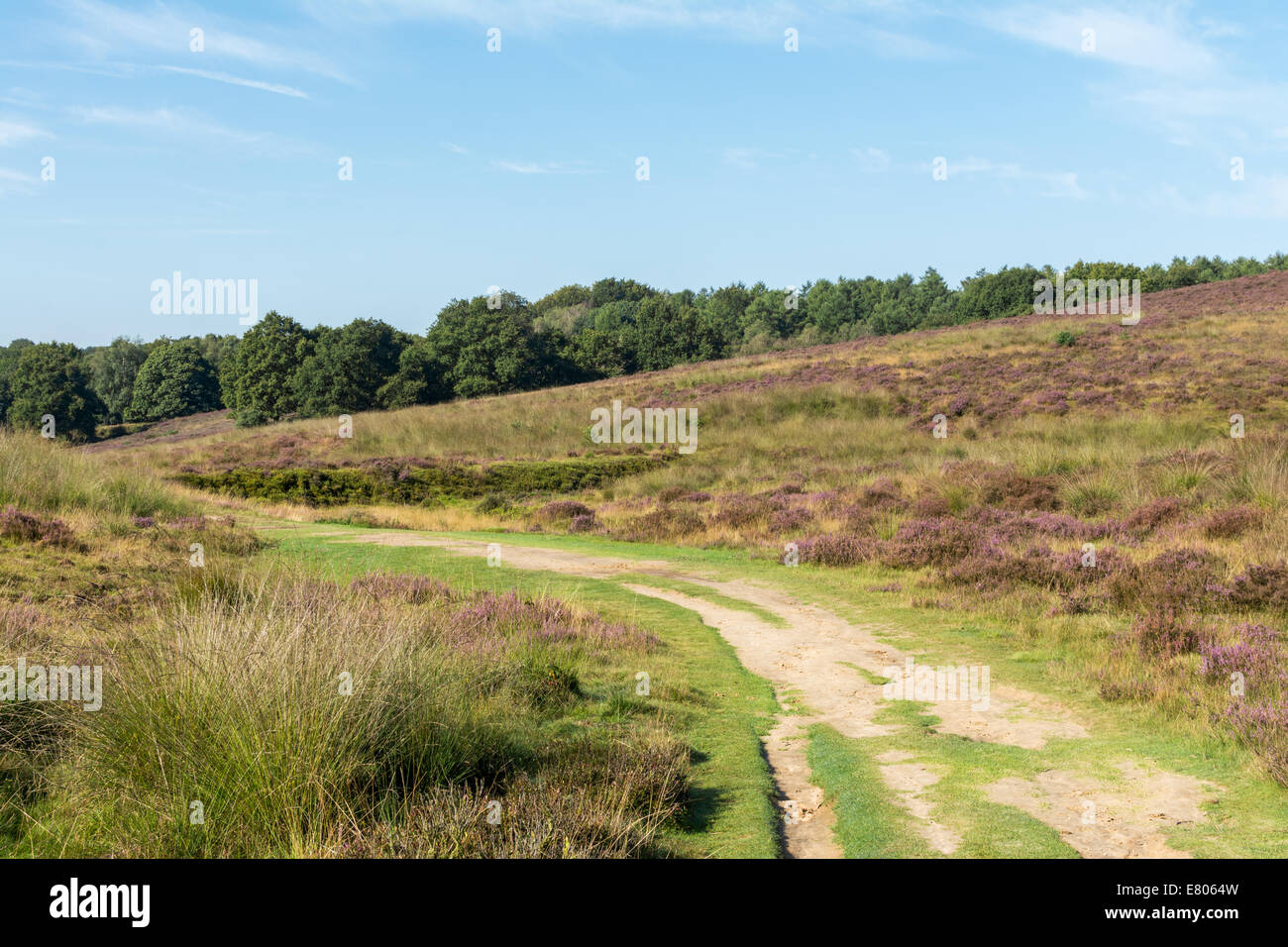 Path leads the eye to bottom of hill in dutch heathland Stock Photo