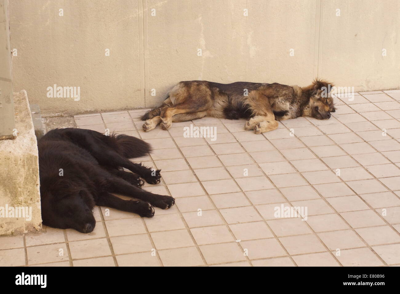2 sleeping dogs lie - Stock Image