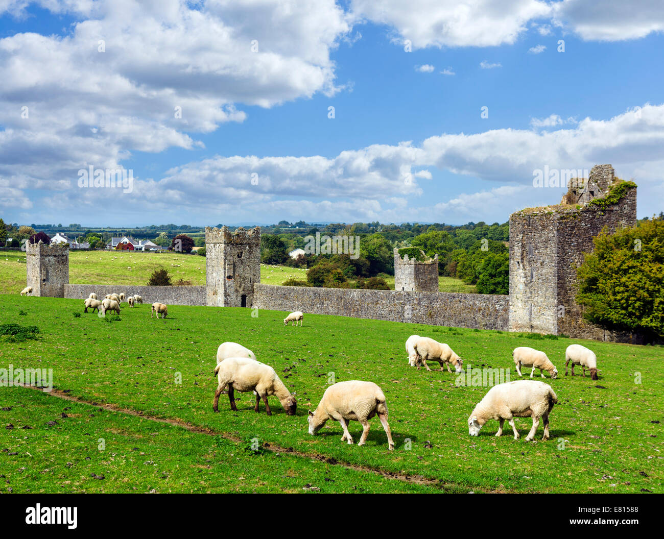 Sheep grazing in front of Kells Priory, County Kilkenny, Republic of Ireland - Stock Image