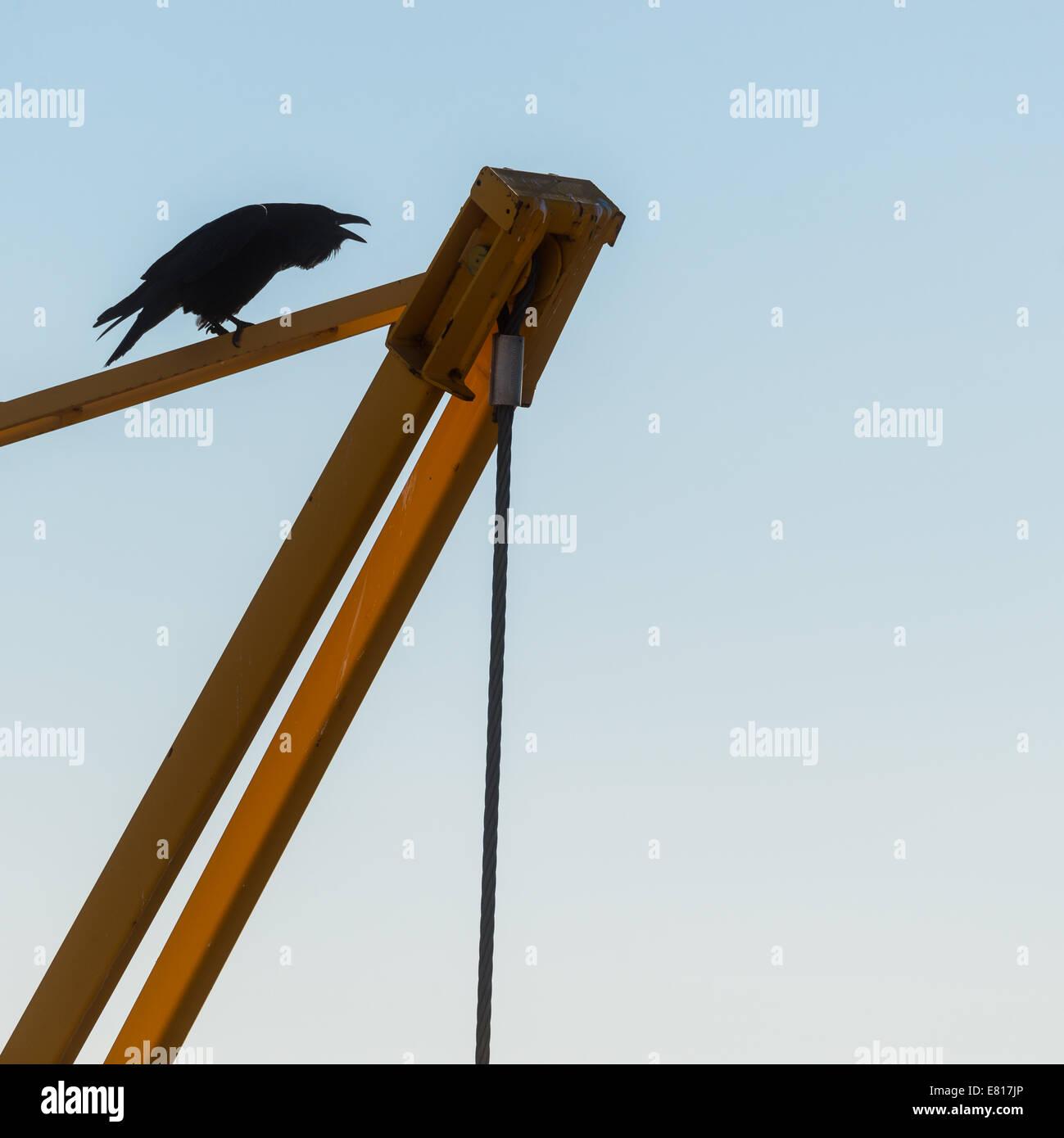 Black Raven perched atop a yellow construction crane - Stock Image