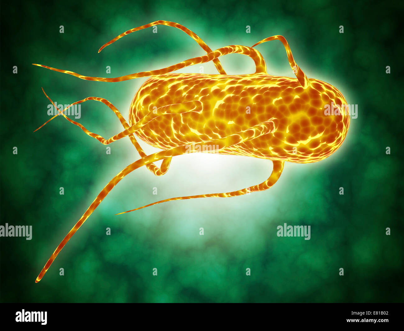 Conceptual image of salmonella. Salmonella is a genus of rod-shaped, gram-negative bacteria. There are two main - Stock Image