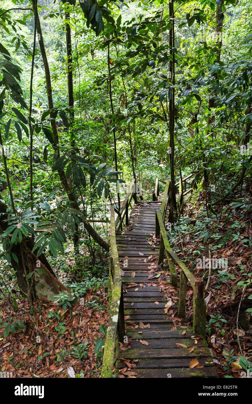 Jungle path in Sarawak, Borneo Malaysia - Stock Image