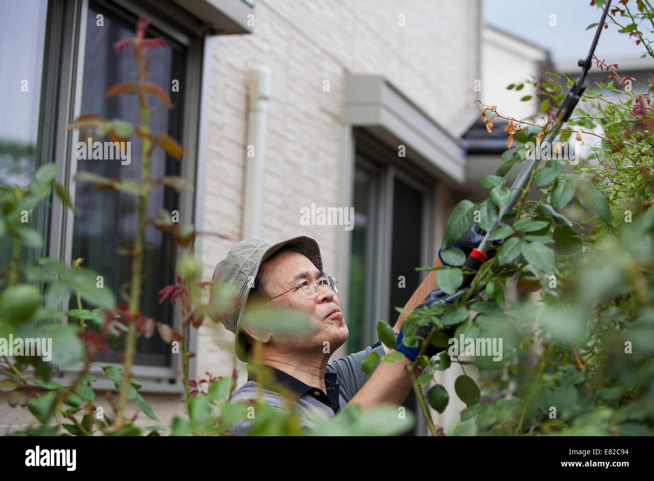 A man working in his garden. - Stock Image