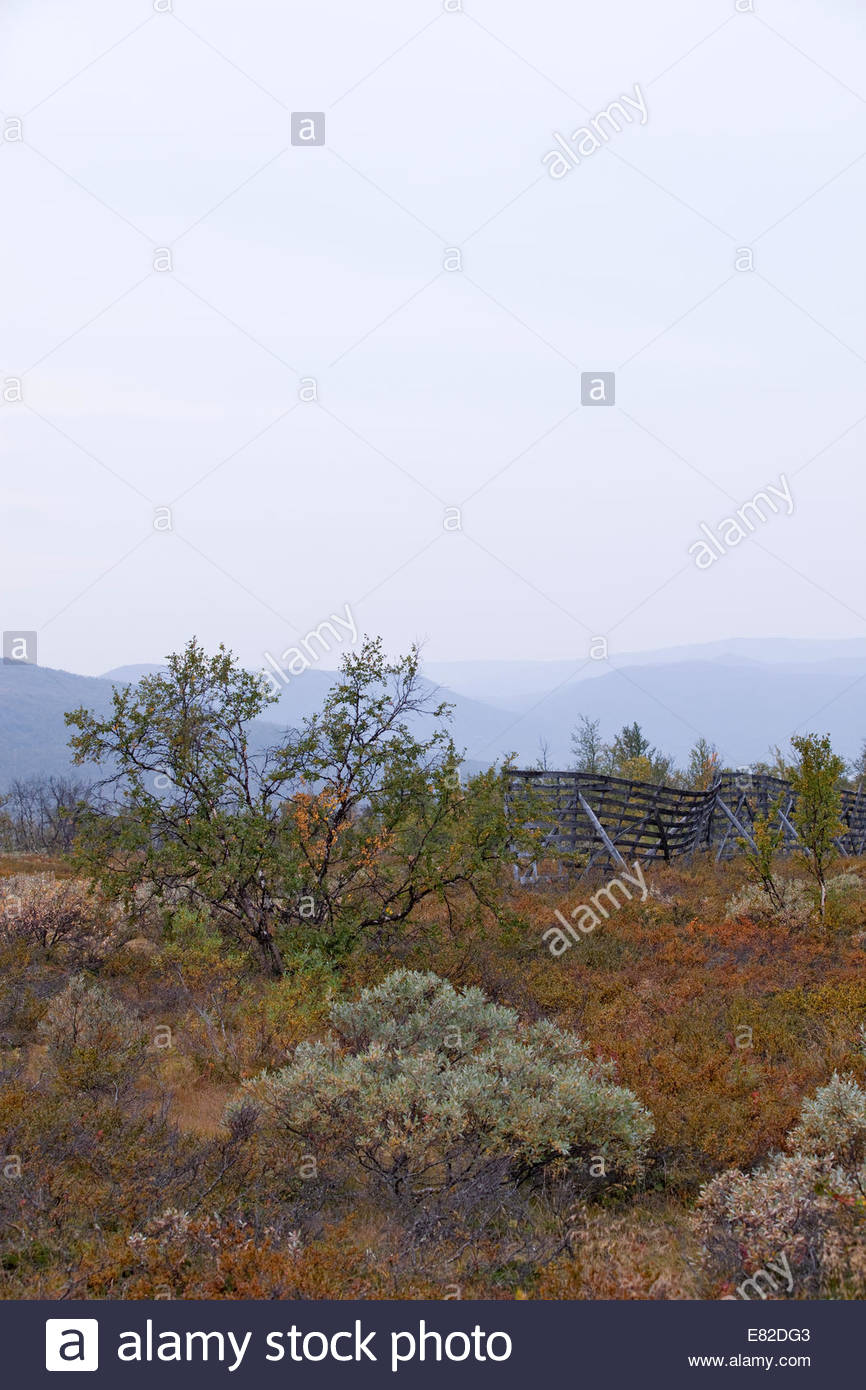 Great colors of fall in Lapland - Stock Image