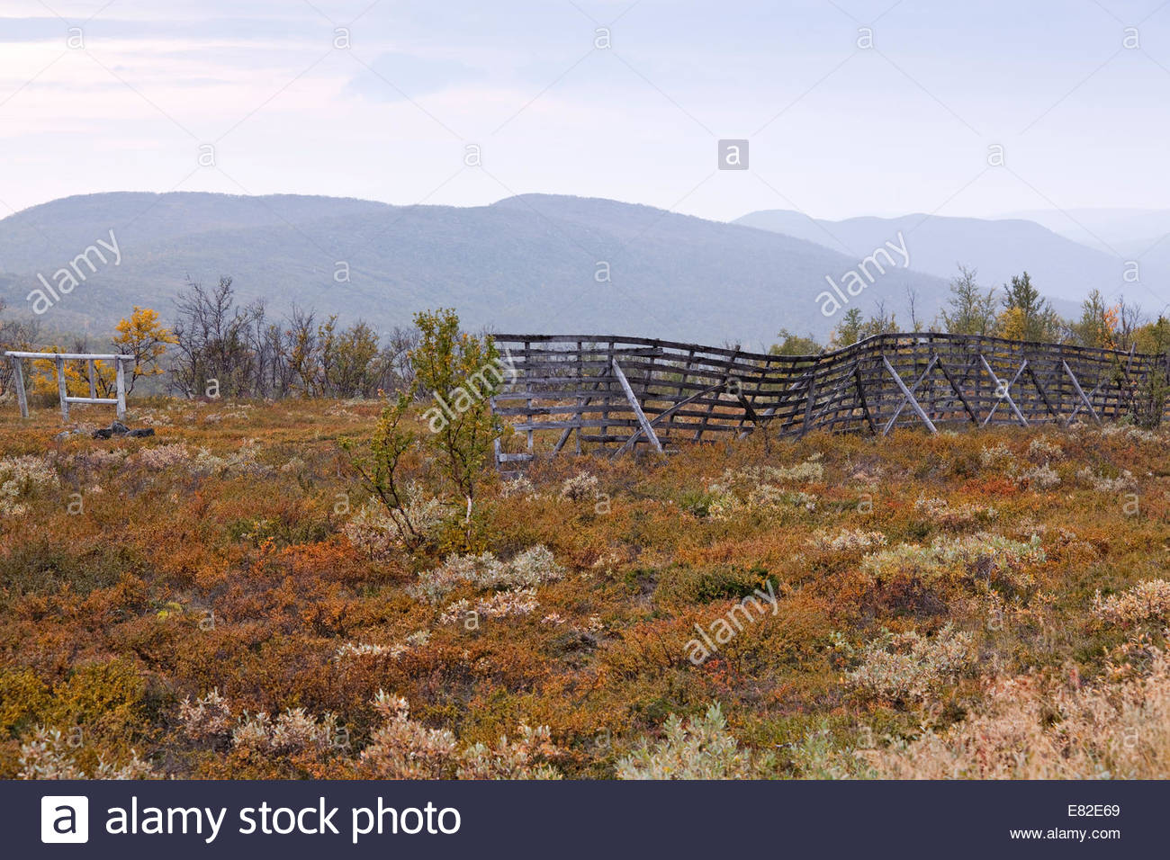 Fall colors in Lapland Finland - Stock Image