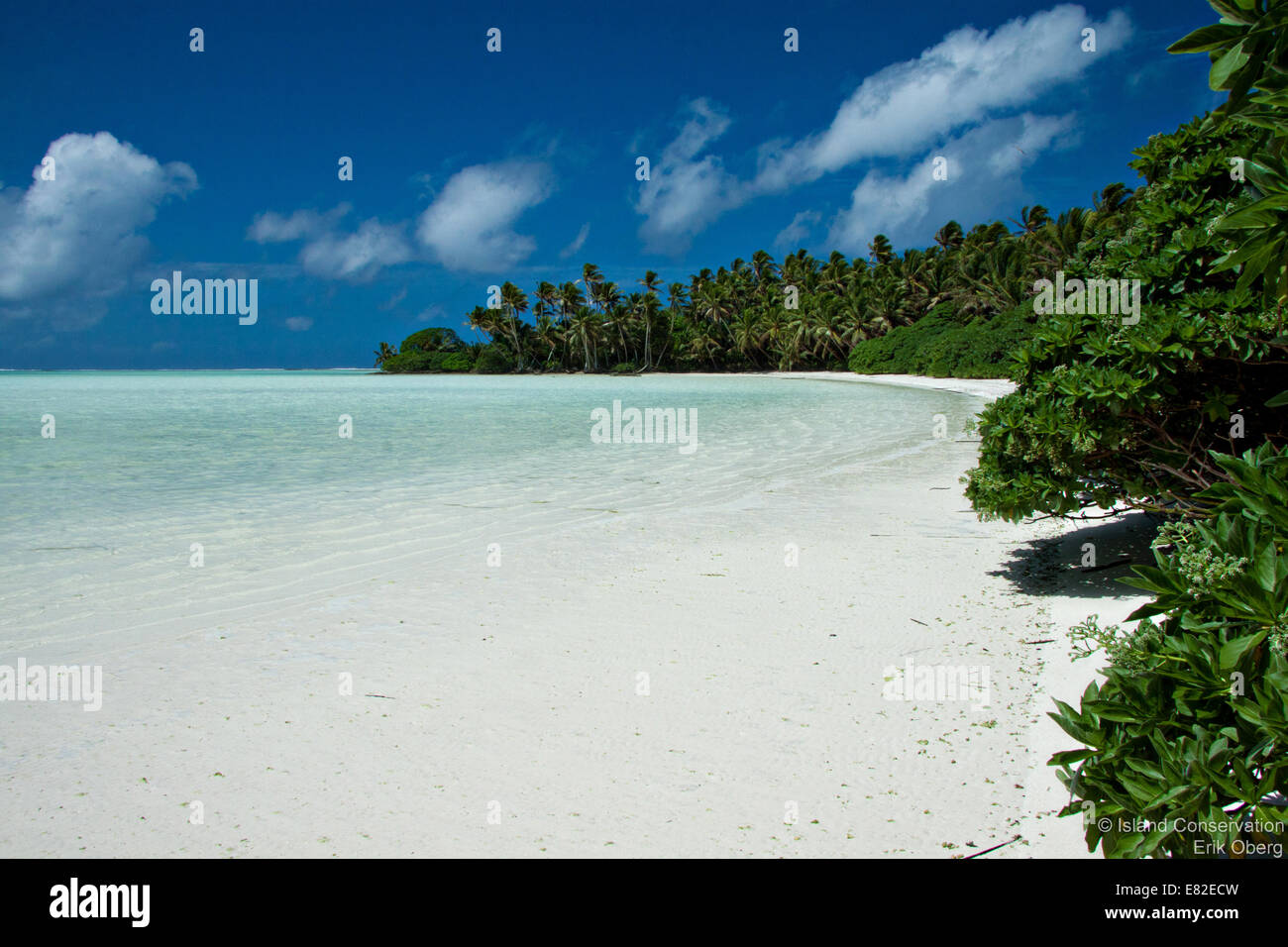Palm fringed white sand beach along a lagoon on Palmyra Atoll an unoccupied island in the equatorial Northern Pacific - Stock Image