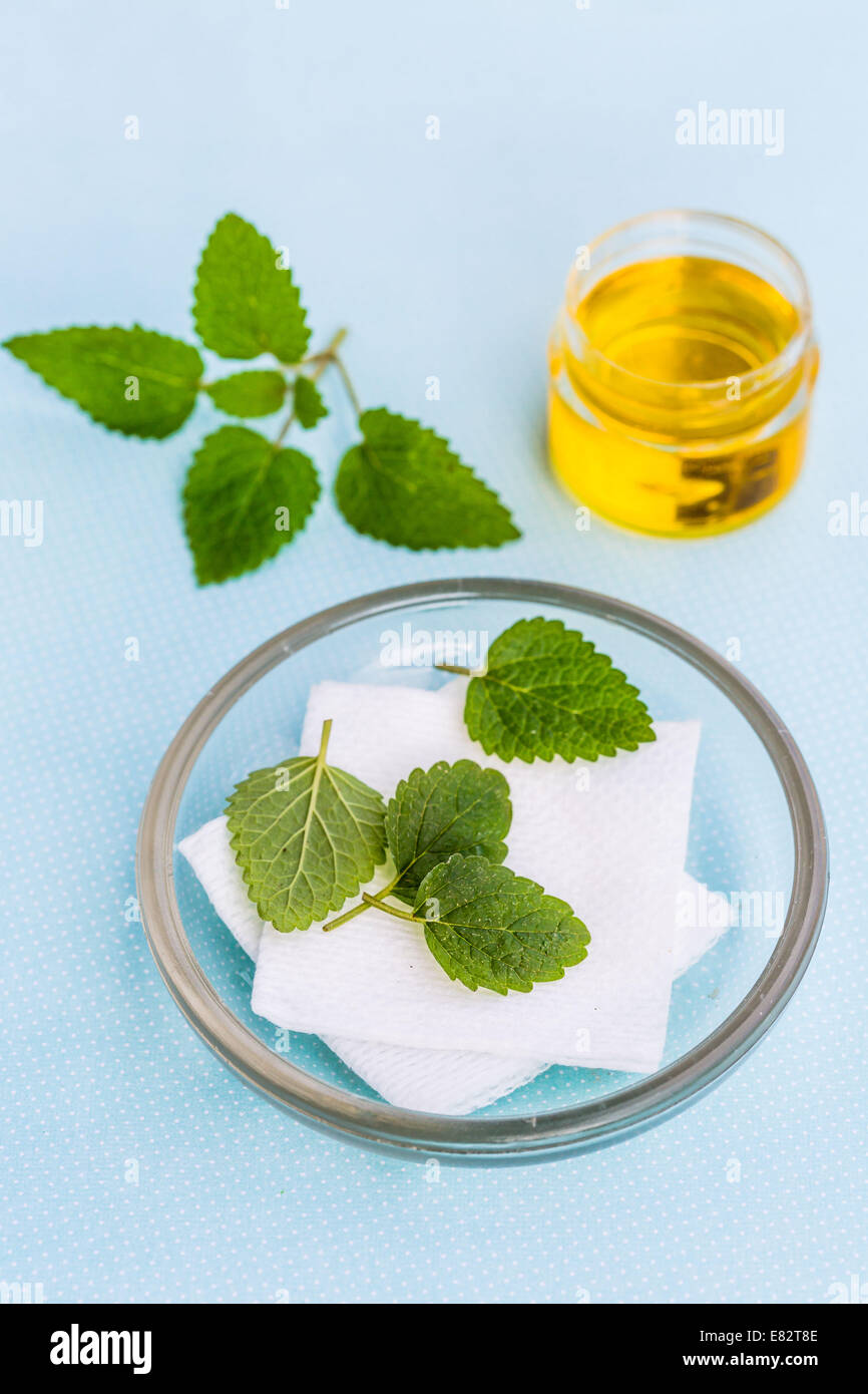 Essential oil of lemon balm (Melissa officinalis). Stock Photo