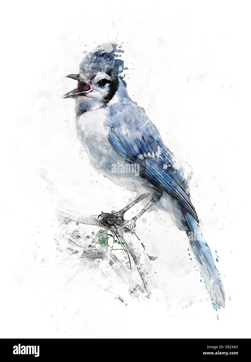 Watercolor Digital Painting Of Blue Jay Bird Stock Photo