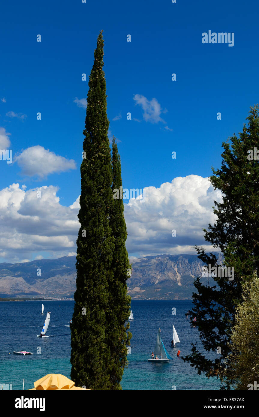Sailboats at sea with Cypress tree in foreground, Lefkas,Ionian Islands, Greece - Stock Image