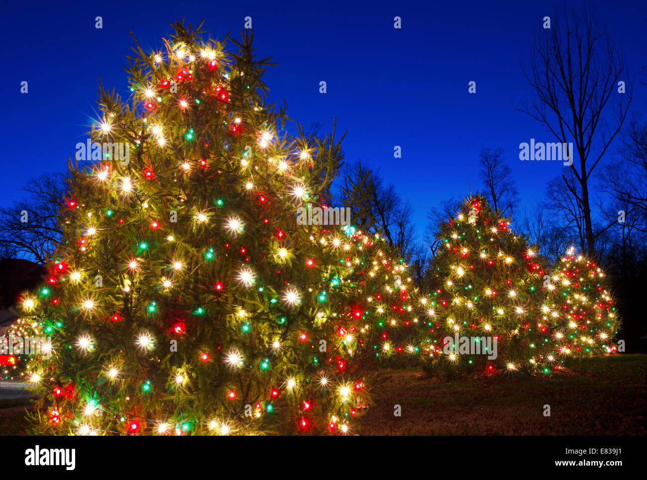 Red And White Christmas Lights.Outdoor Christmas Trees Have Been Decorated With Red And