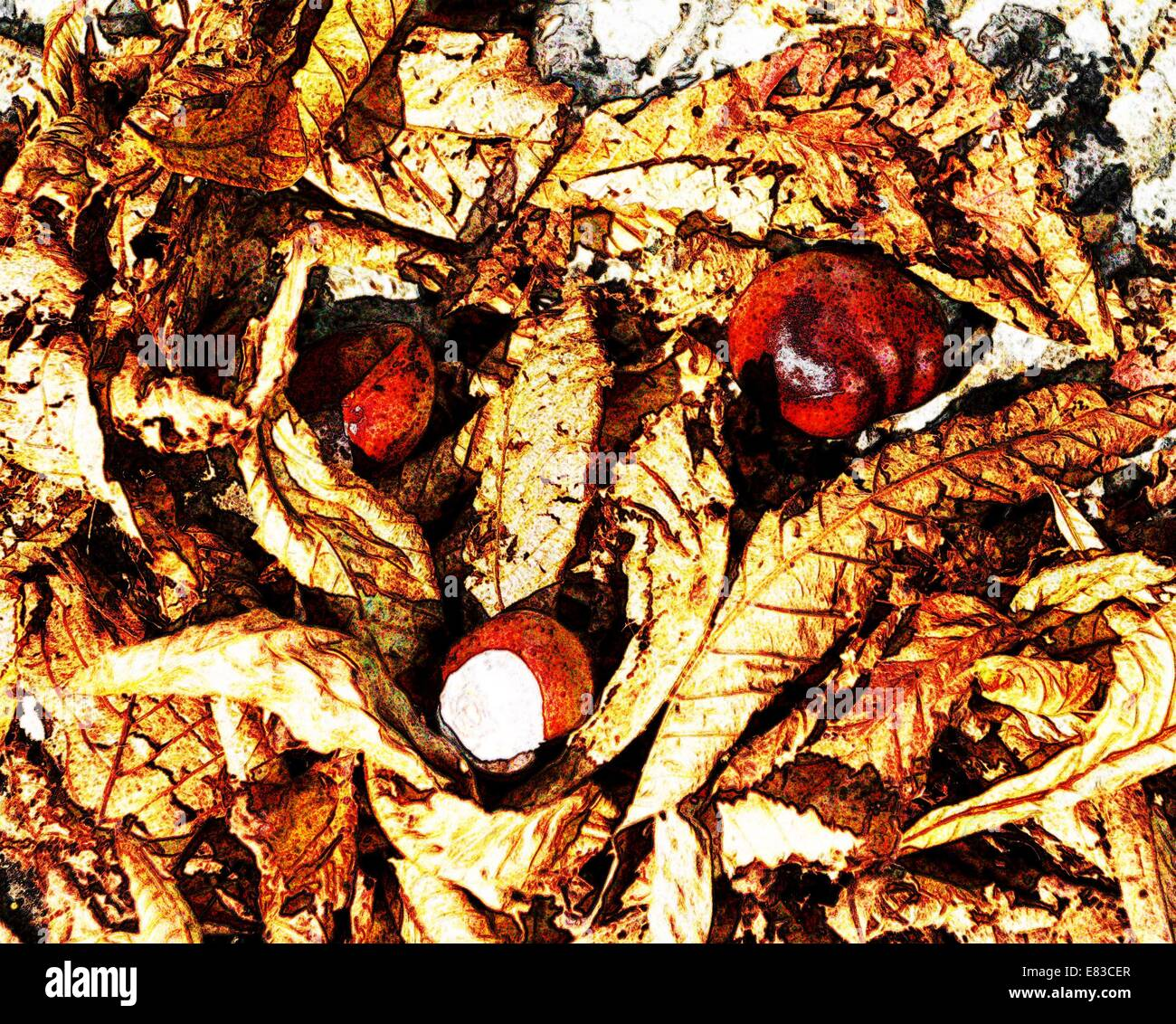 Conkers and Horse Chestnut tree leaves on the ground in Autumn - Stock Image