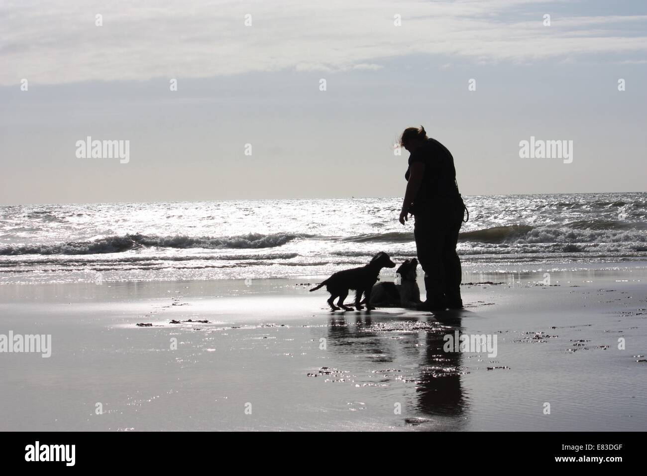 a person with two dogs on a glimmering sandy beach in sunshine - Stock Image