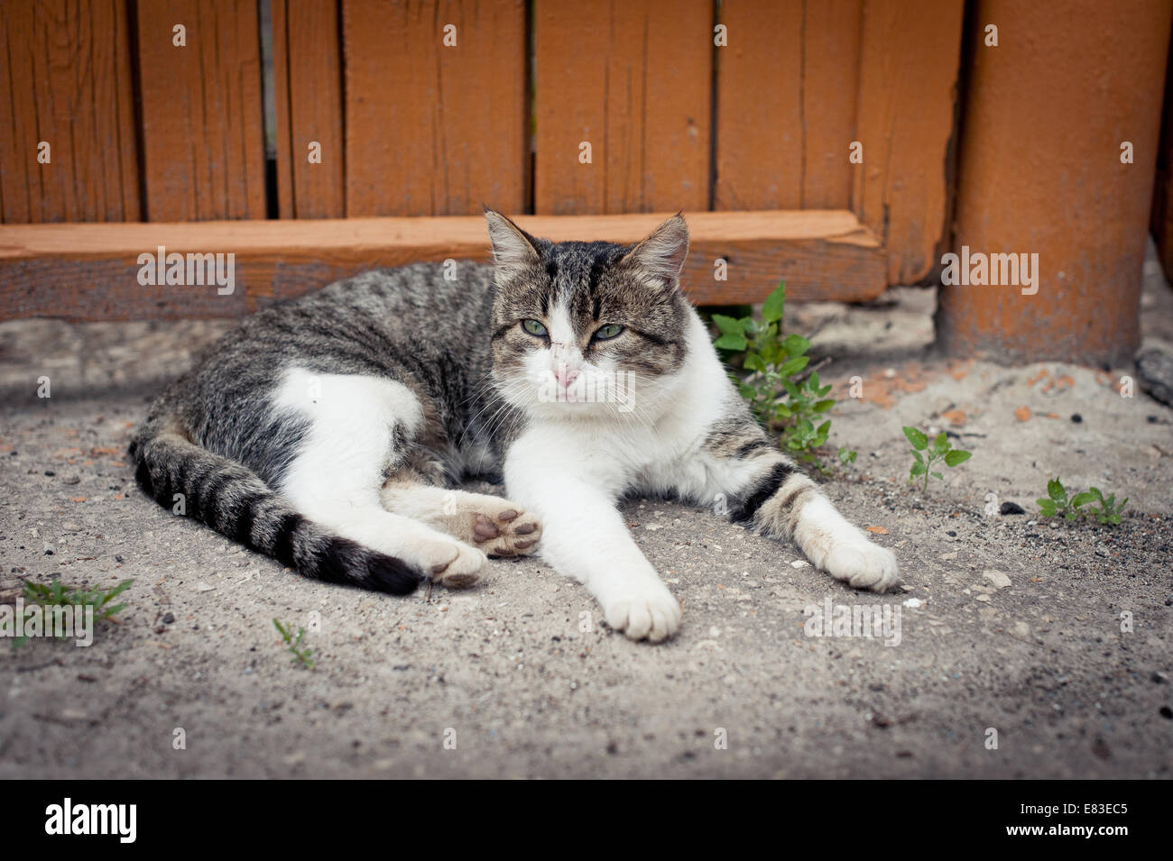 Cat at a fence. The gray-white cat basked in the sun. - Stock Image