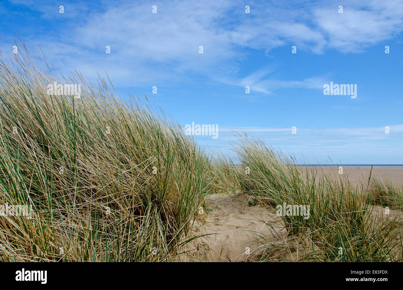 Sand Dune with Marram Grass against a beautiful blue sky. - Stock Image