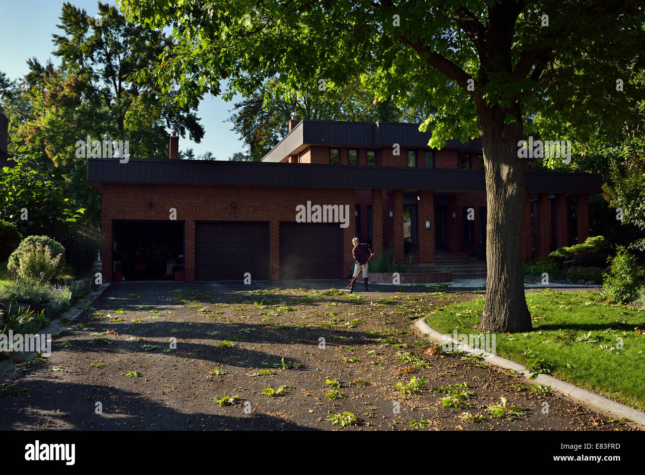 Woman homeowner sweeping mass of acorns for large Oak tree off a large three car garage circular driveway - Stock Image