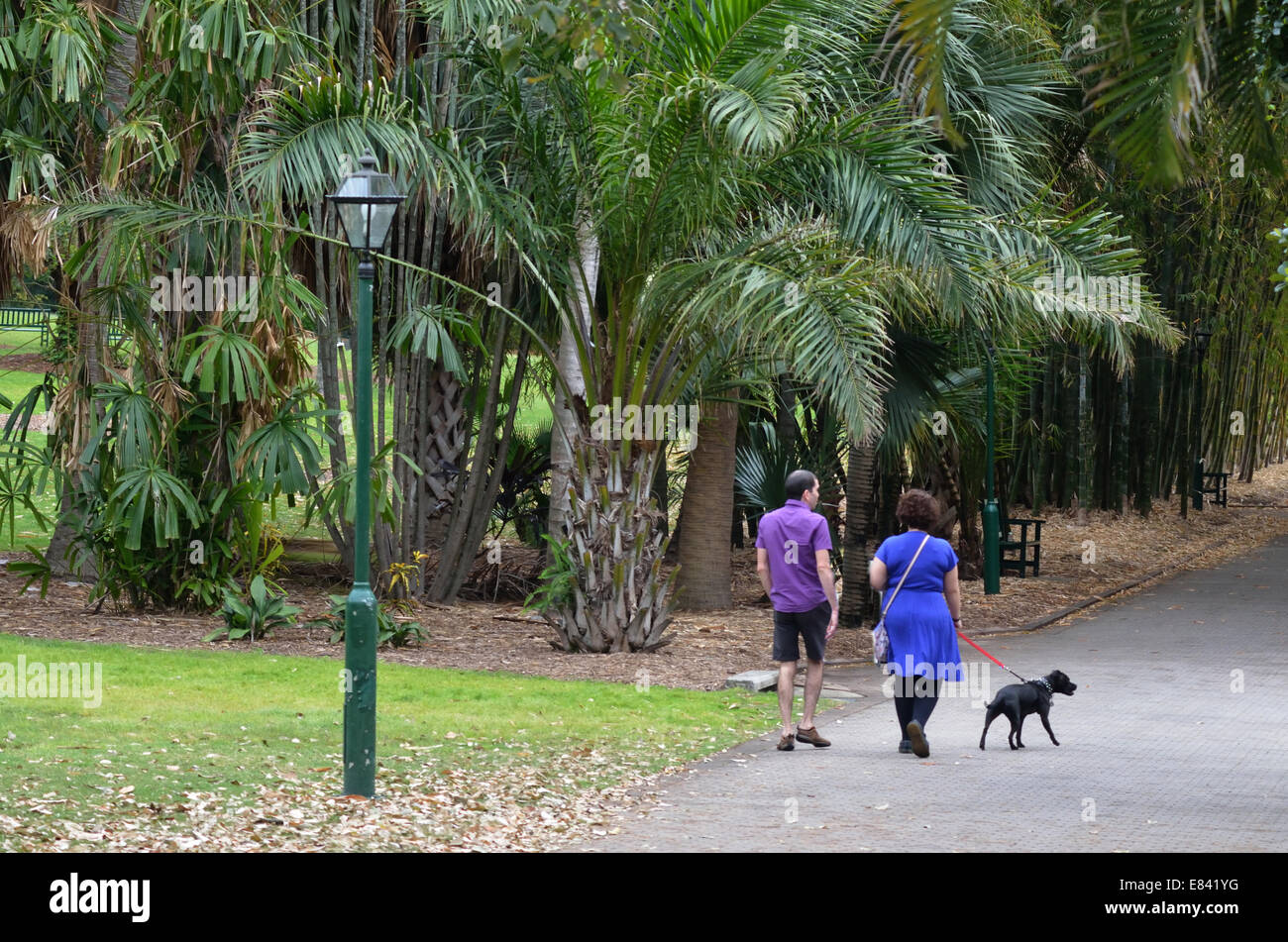 Couple walking a dog at Brisbane City Botanic Gardens. - Stock Image
