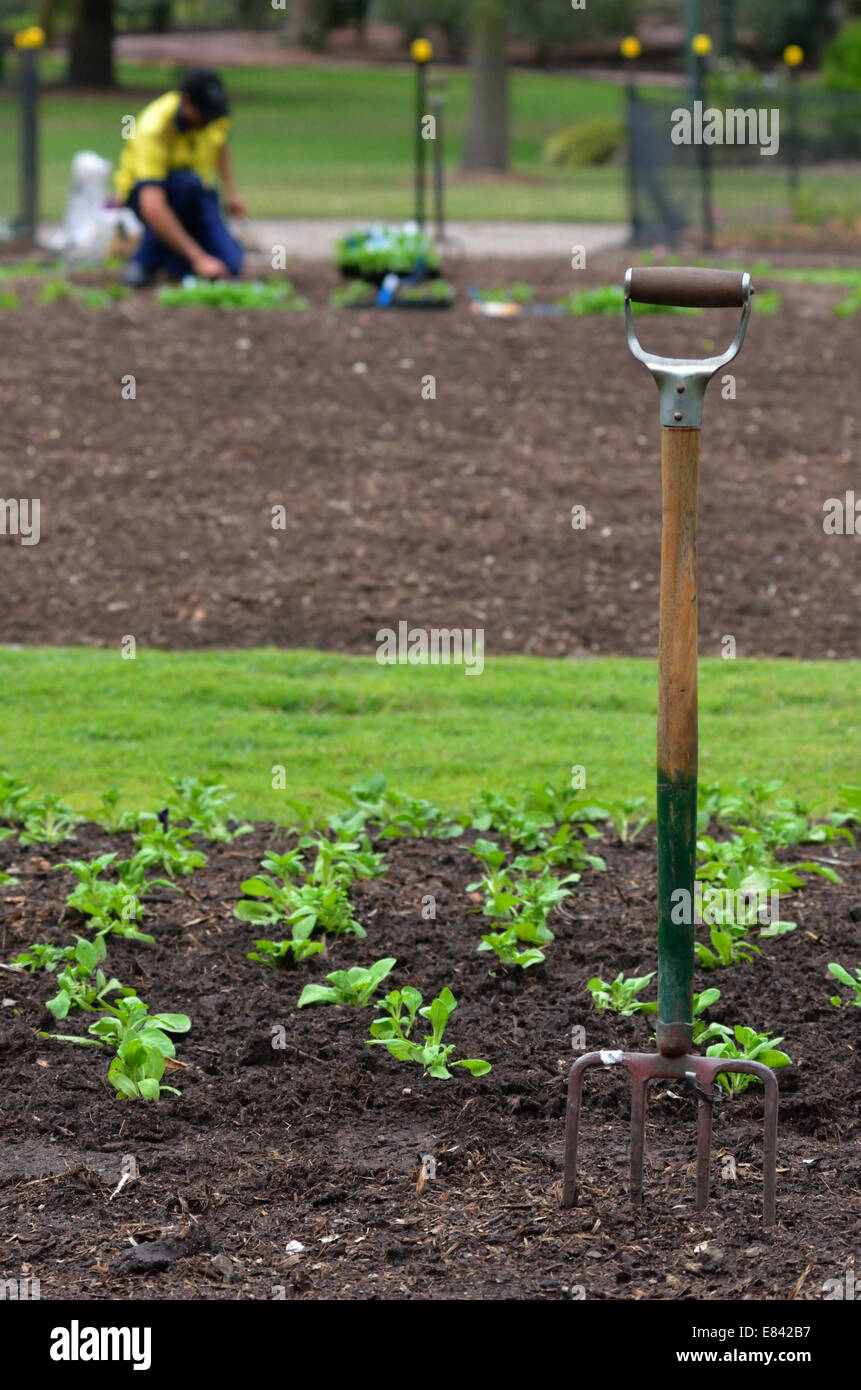 BRISBANE, AUS - SEP 24 2014:Gardner planting plants at Brisbane City Botanic Gardens. - Stock Image