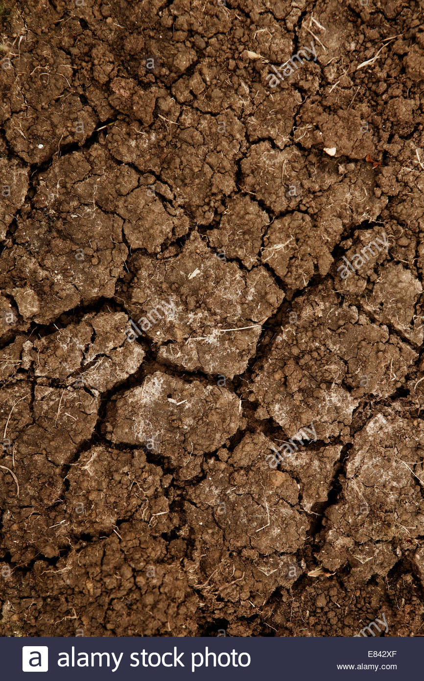 Cracking & semi dry dirt soil texture background - Stock Image