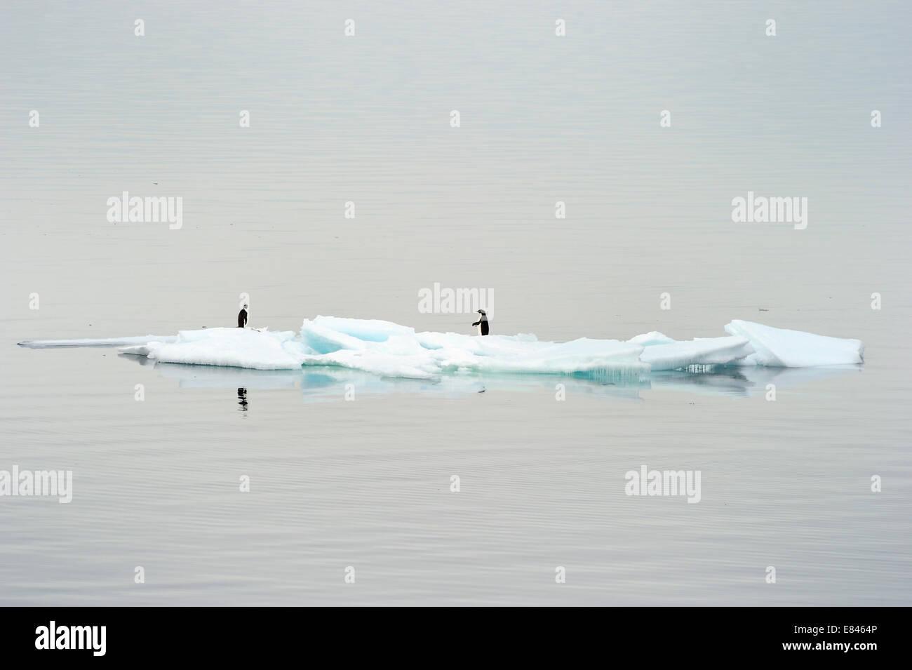 Two Adélie Penguin (Pygoscelis adeliae) standing on ice berg, Ross sea, Antarctica. - Stock Image
