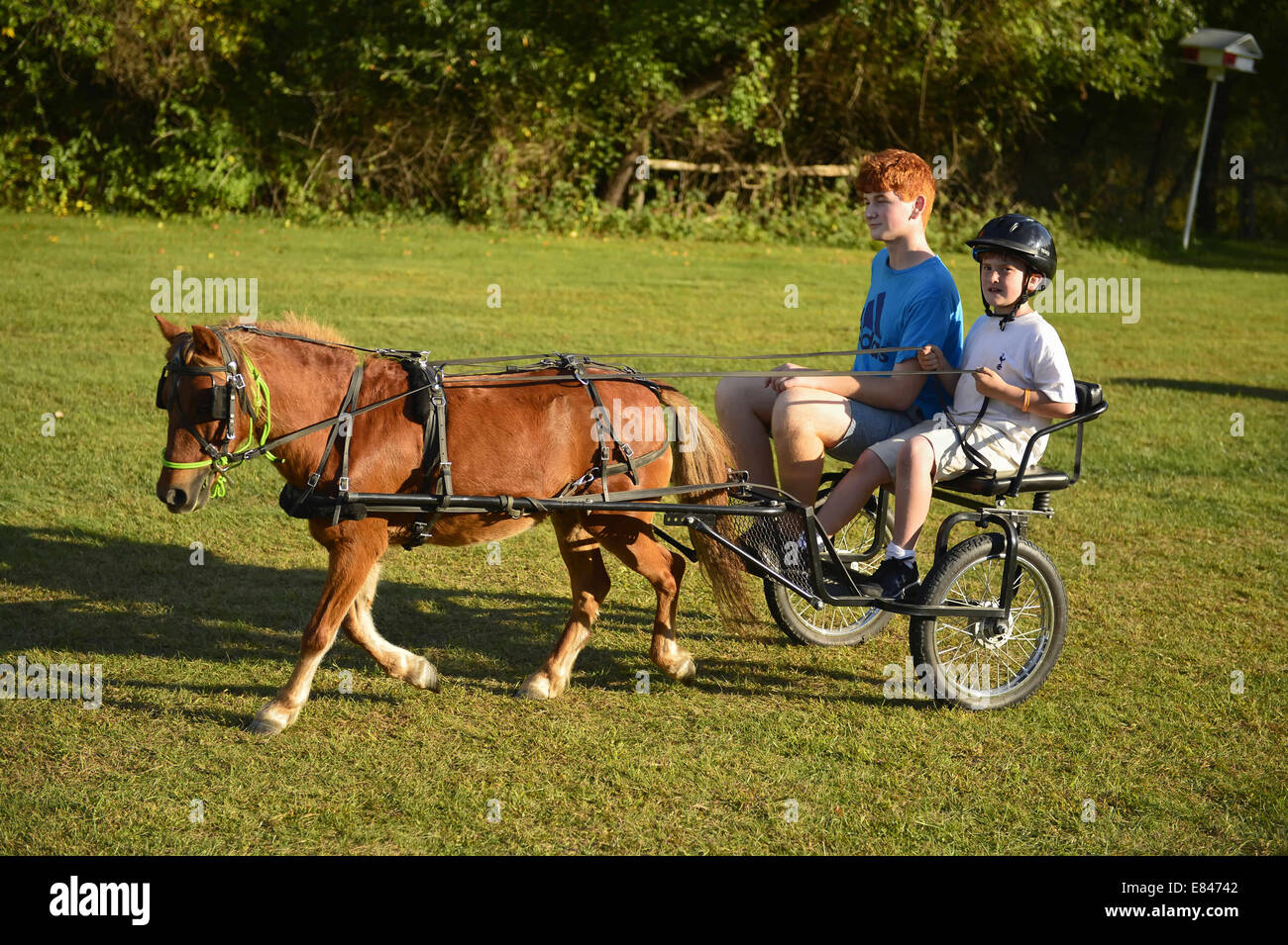 Old Bethpage, New York, USA. 28th Sep, 2014. Chef the miniature horse is pulling a small cart with two redhead boys, - Stock Image