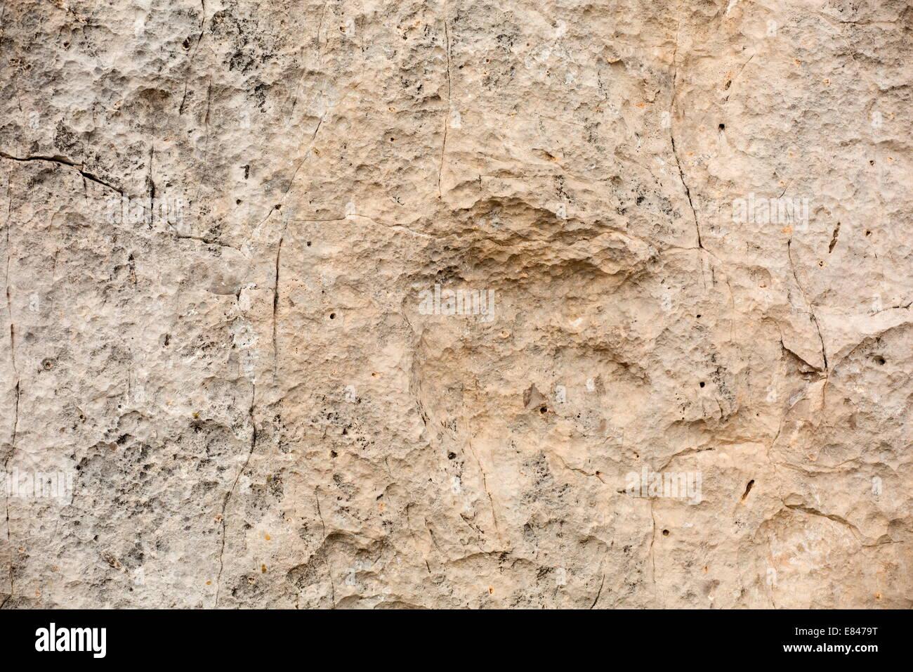 Dinosaur footprint, 200 myo Eubrontes sp, Dolomites, Italy - Stock Image