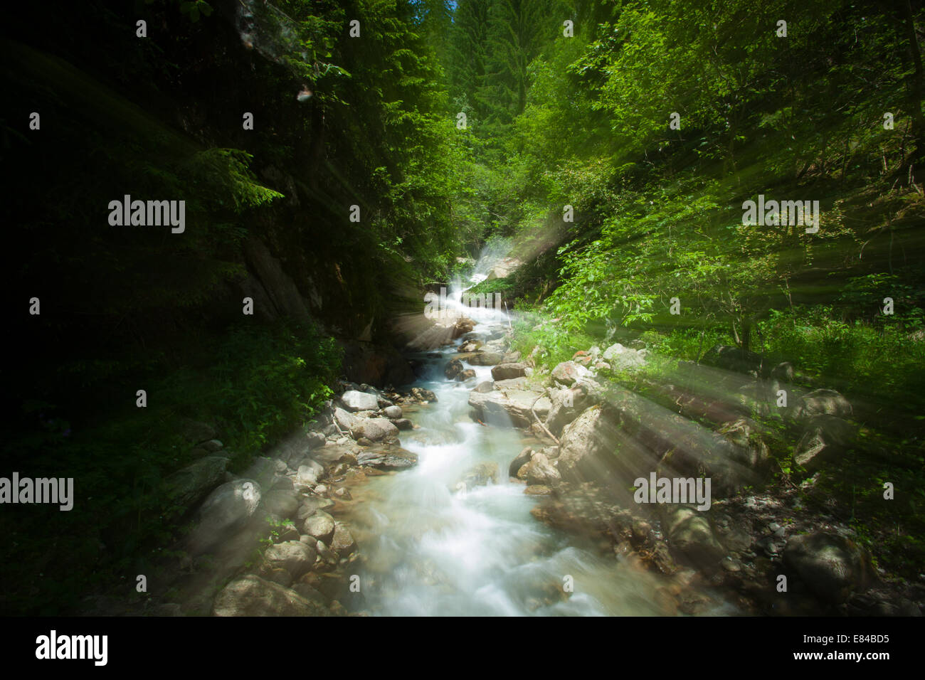 Mystic river in the forest - Stock Image