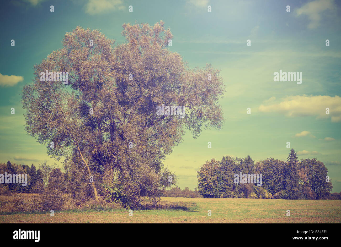 Vintage picture of autumn field with trees, retro filtered. - Stock Image