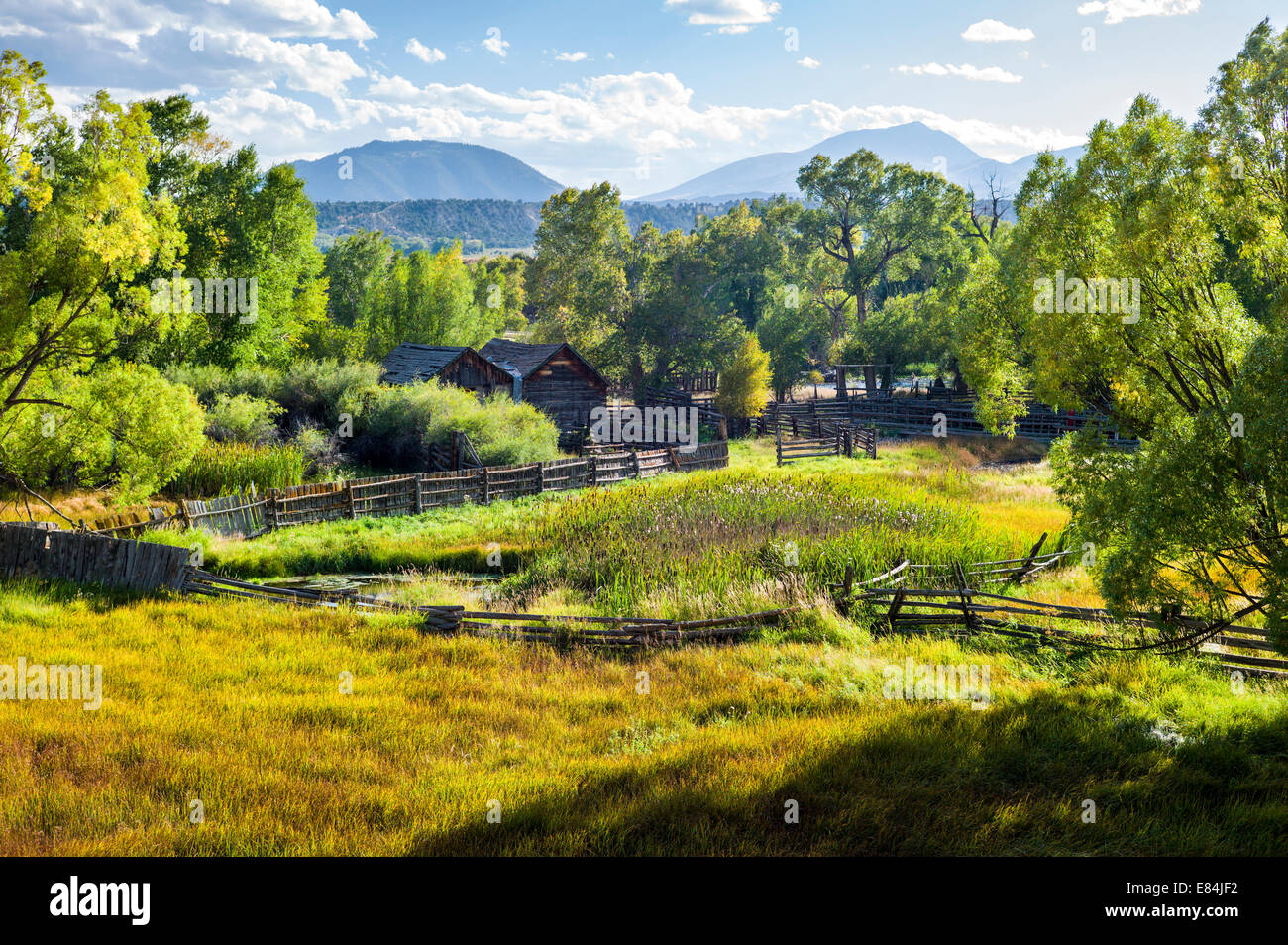 Cottonwood tree & lush pasture along the Arkansas River, Rocky Mountains beyond, Central Colorado, USA - Stock Image