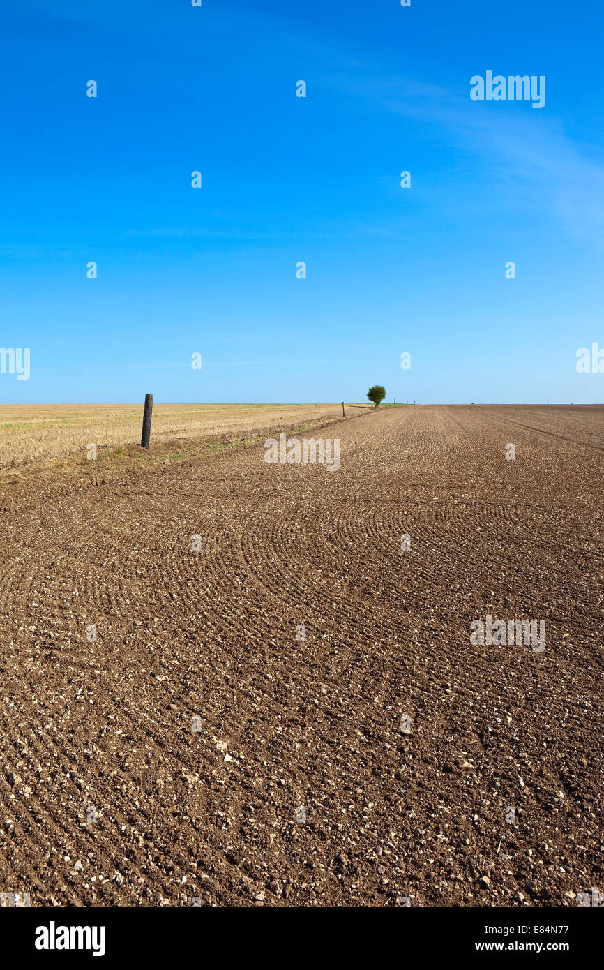 Pattern and texture of cultivated and sown arable field soil under a blue sky in autumn, fall - Stock Image