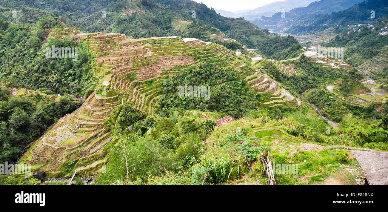 Rice Terraces, Banaue View Point, Banaue, Philippines - Stock Image