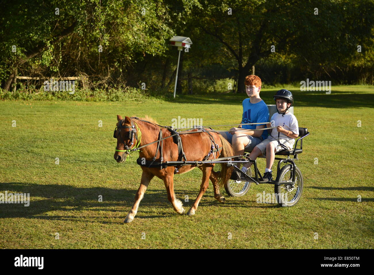 Old Bethpage, New York, USA. 28th September 2014. Chef the miniature horse is pulling a small cart with two redhead - Stock Image