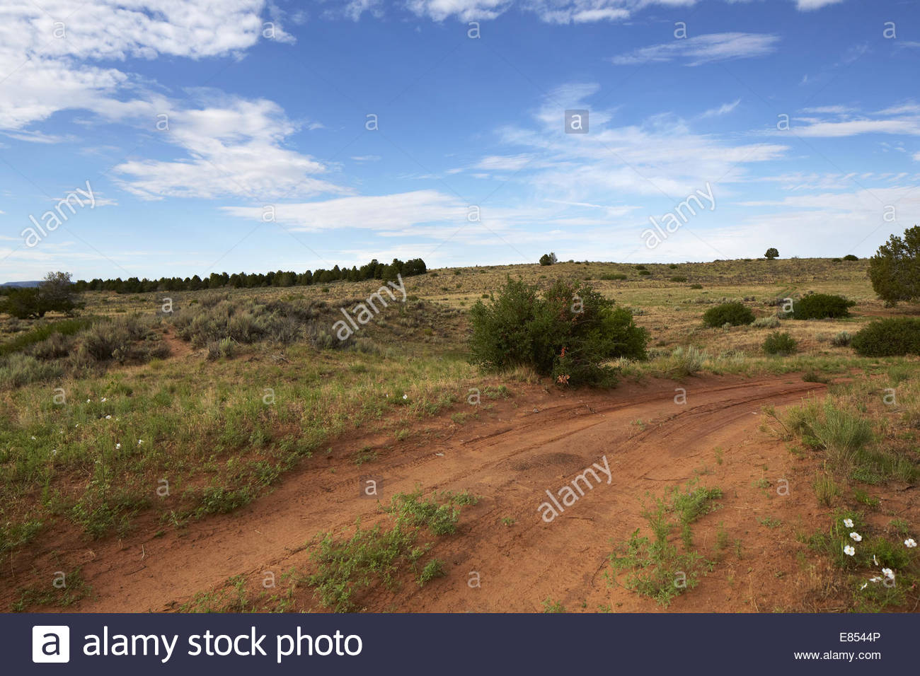 Desert Road: A rough dirt road on a beautiful summer day and beautiful cloud. - Stock Image