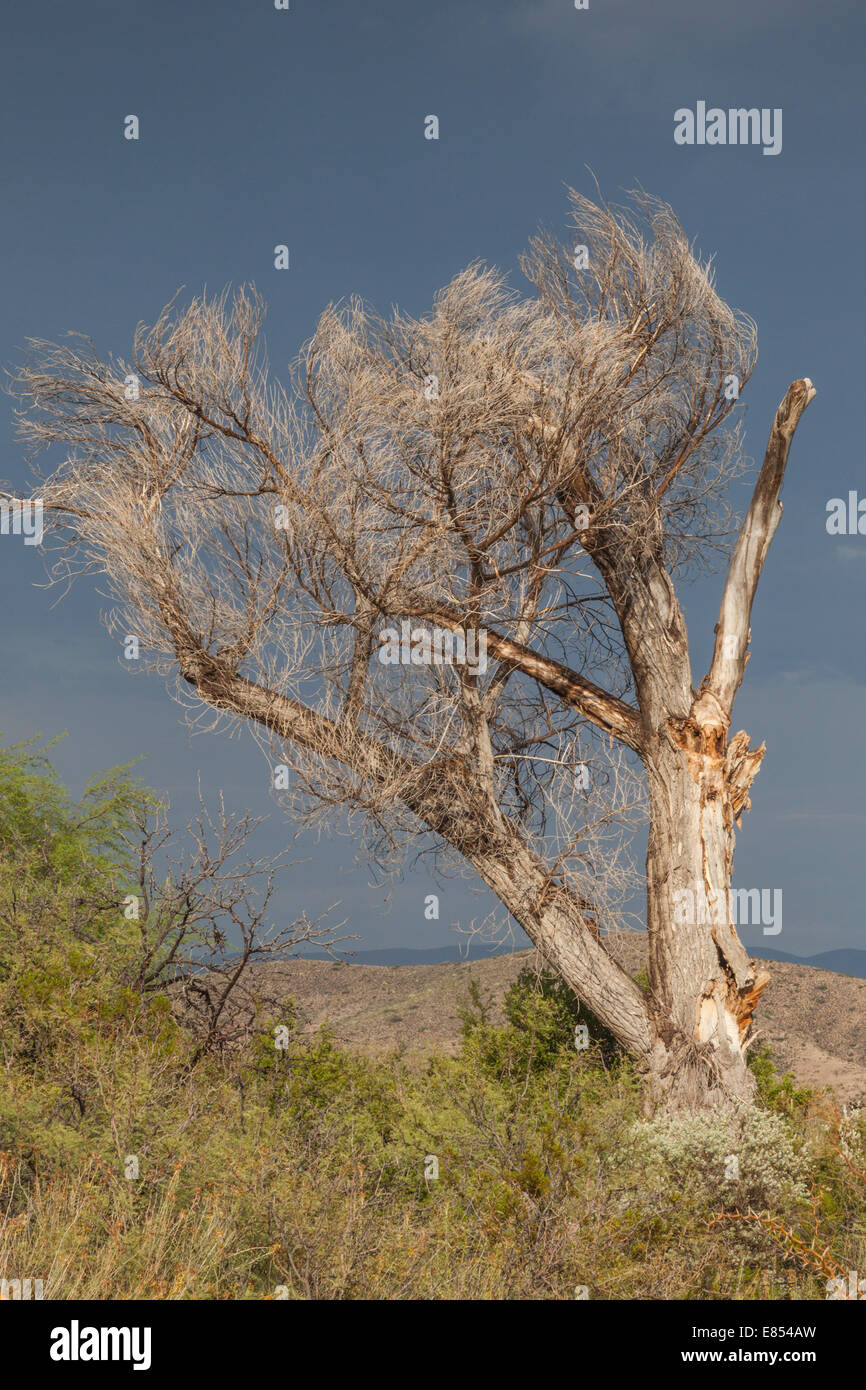Light after storm in Big Bend National Park. Stock Photo