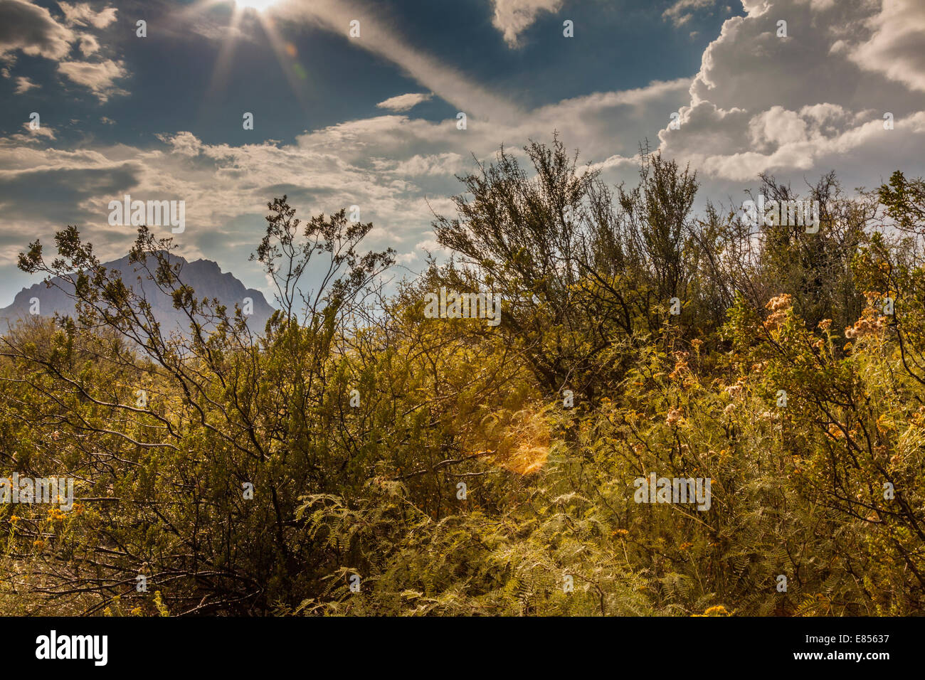 Starburst and light after storm at Dugout Wells in Big Bend National Park. - Stock Image