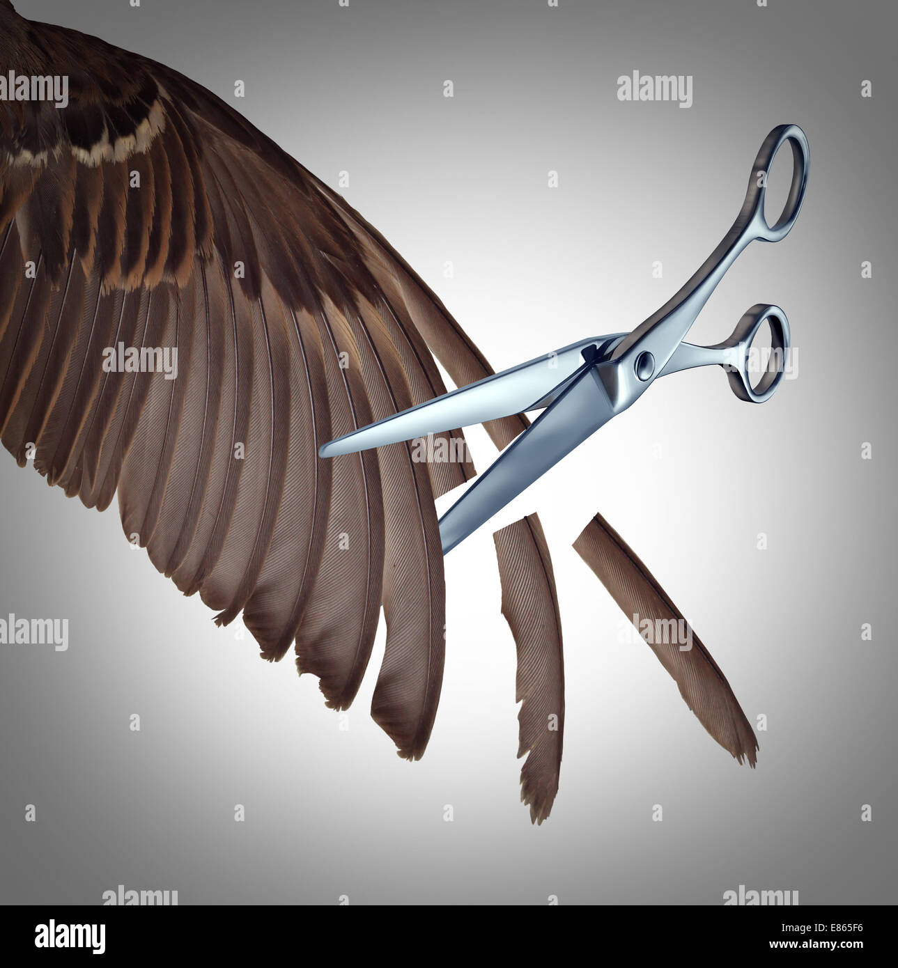 Losing freedom concept as a restriction metaphor to clip the wings of somebody with the feathers of a bird wing - Stock Image