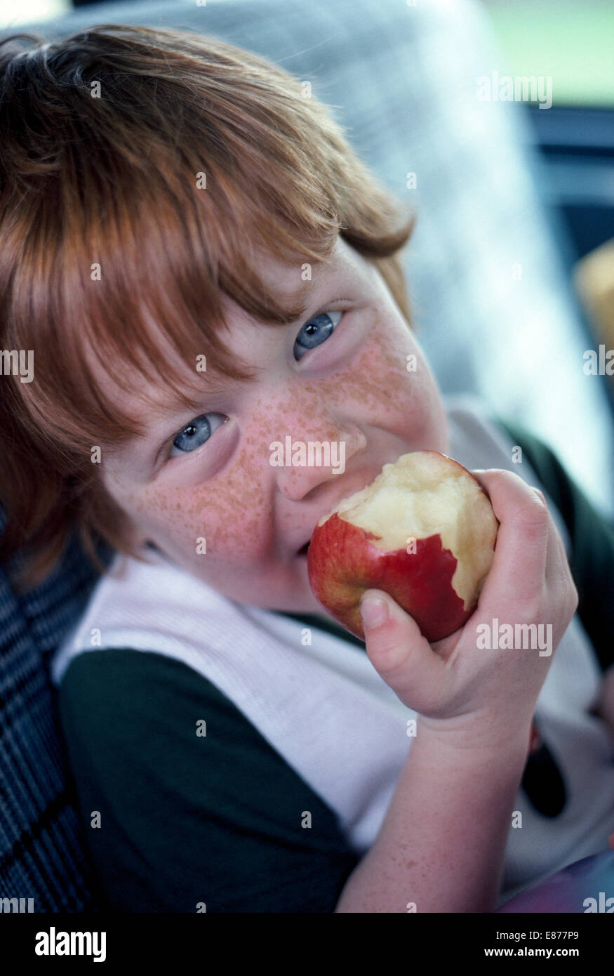 A four-year-old American boy with red hair, blue eyes and a freckled face enjoys eating an apple in this informal - Stock Image