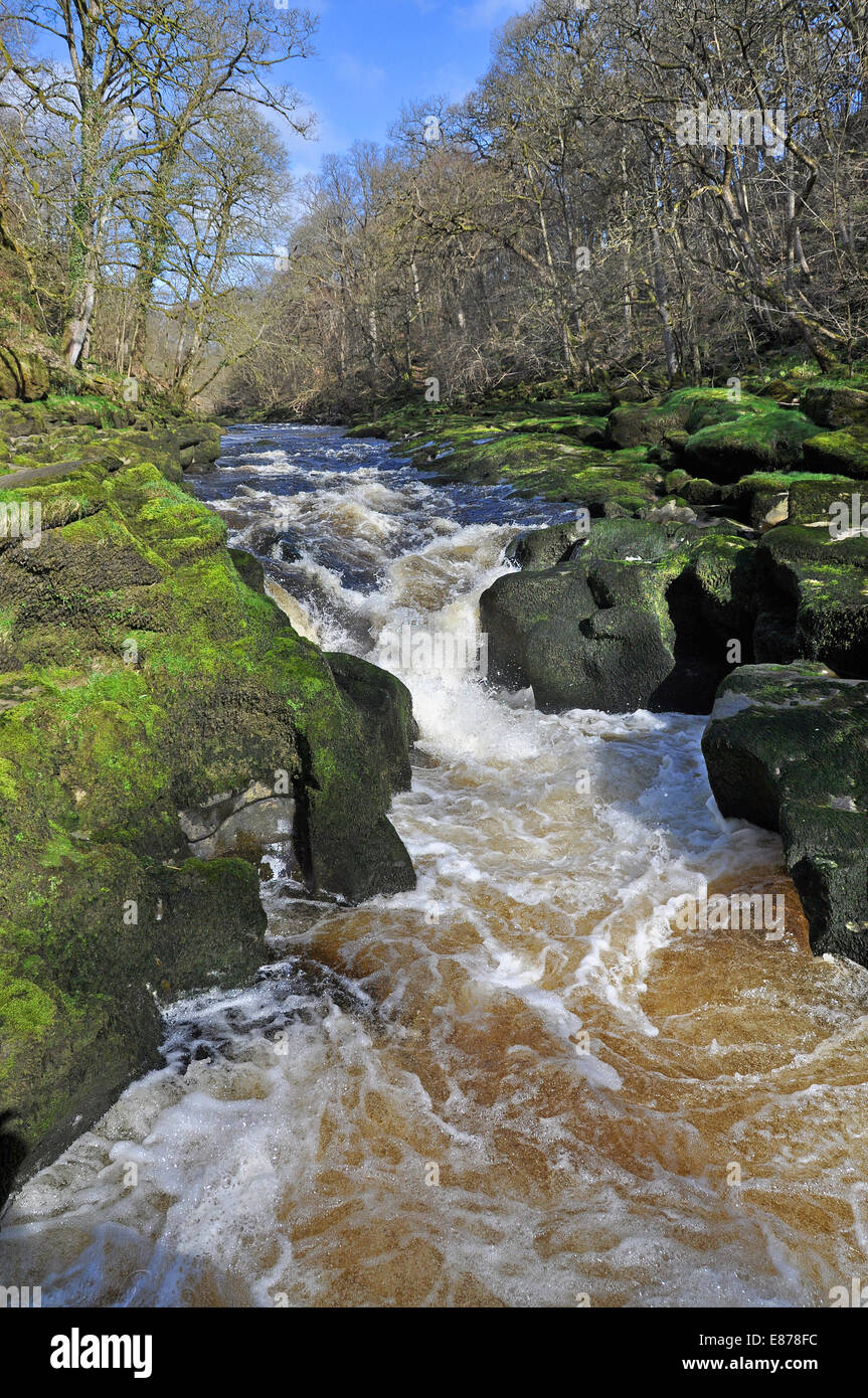 The Strid, near Bolton Abbey, a narrow funnel of water below which there is a pool higher/deeper than a house!Tourist - Stock Image