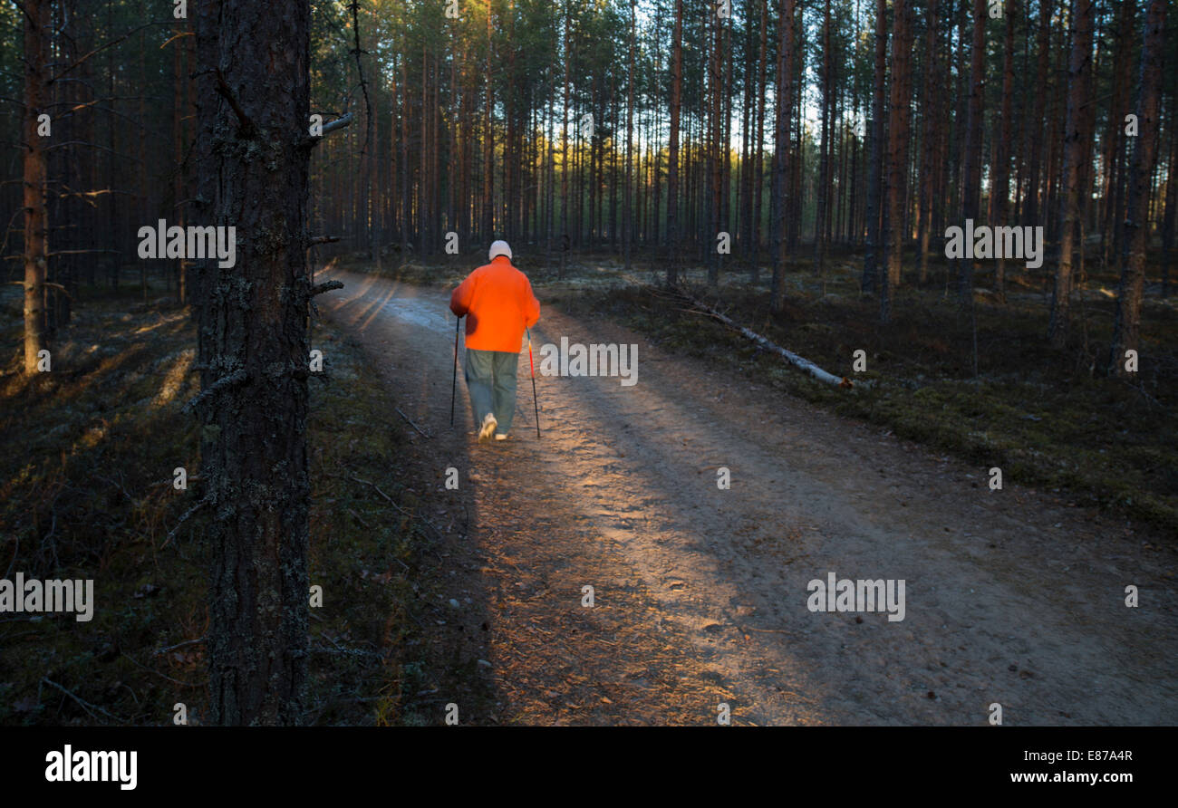 Isolated elderly senior woman Nordic walking ( pole walking ) in the taiga forest at dusk , Finland Stock Photo