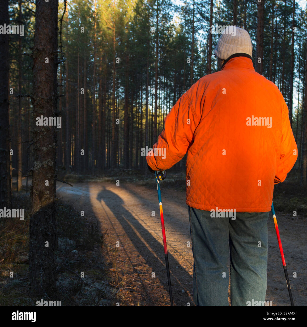 Elderly senior woman standing in the taiga forest with nordic walking poles , Finland Stock Photo