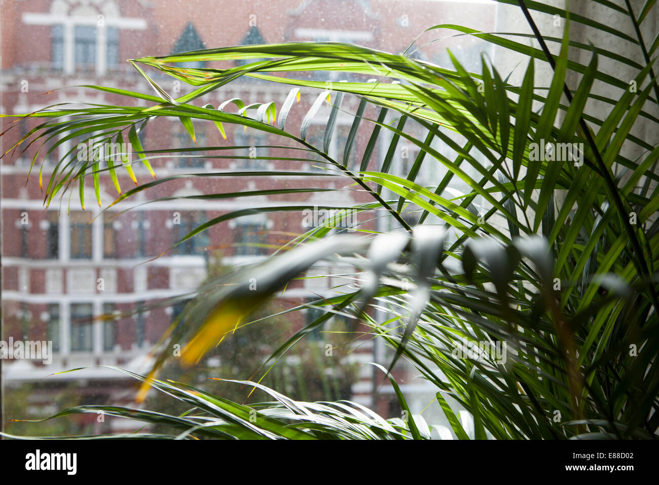 View through a dirty window pane, Lindener marketplace, Hanover, Lower Saxony, Germany, Europe, - Stock Image