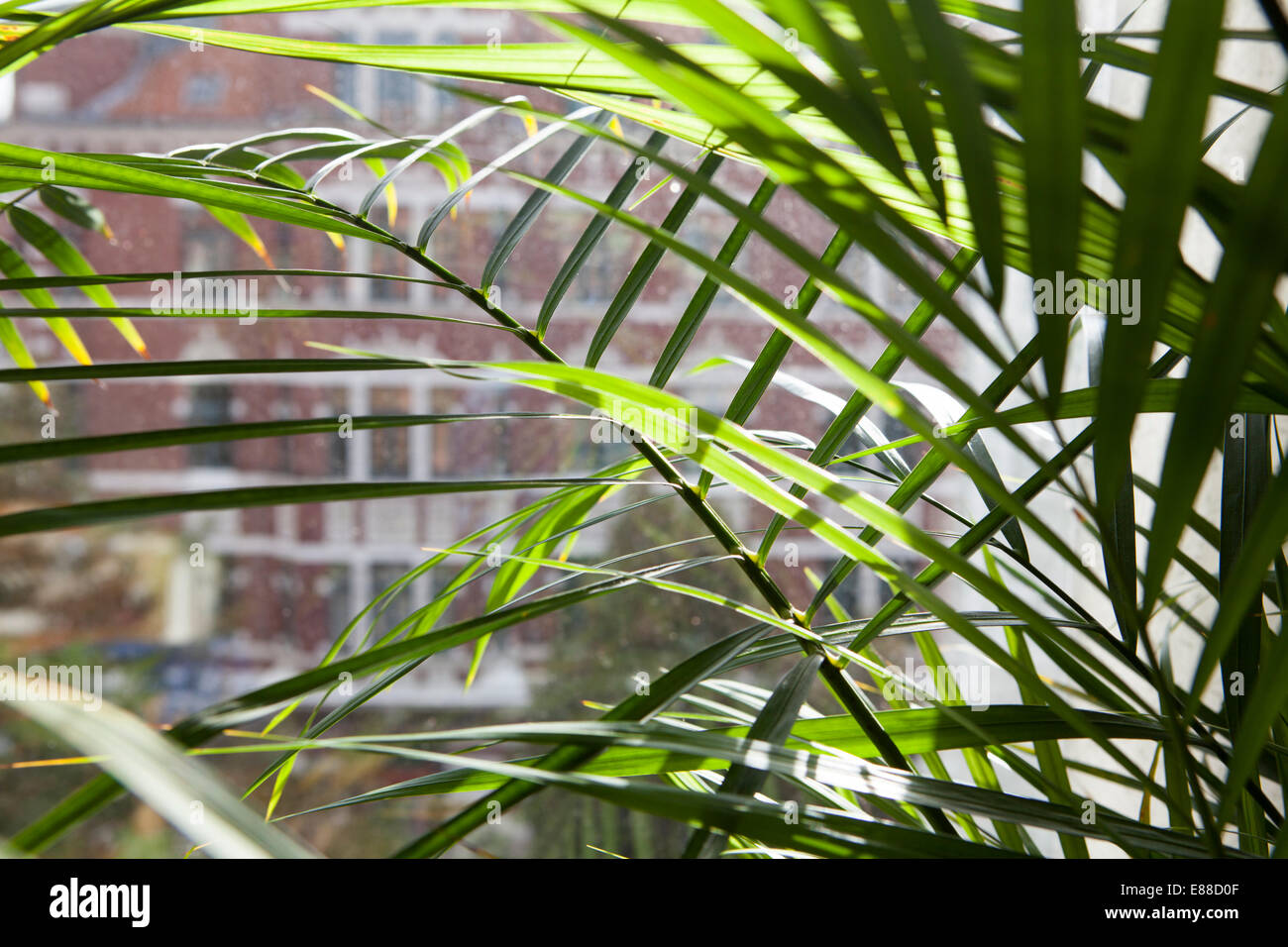 View through a dirty window pane, Lindener marketplace, Hanover, Lower Saxony, Germany, Europe - Stock Image