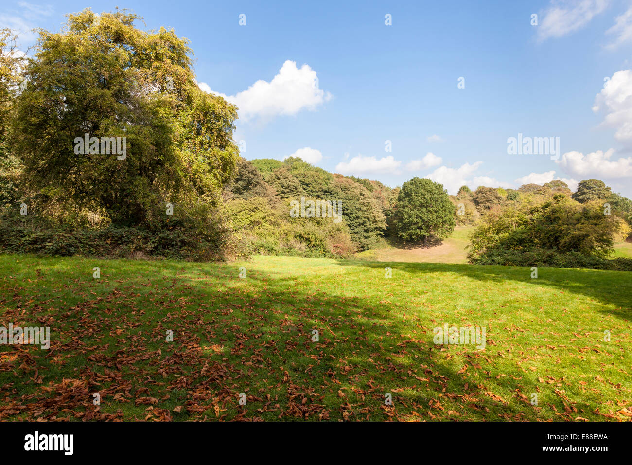 September countryside. Autumn leaves on an open area of grass within woodland at Colwick Woods, Nottingham, East - Stock Image