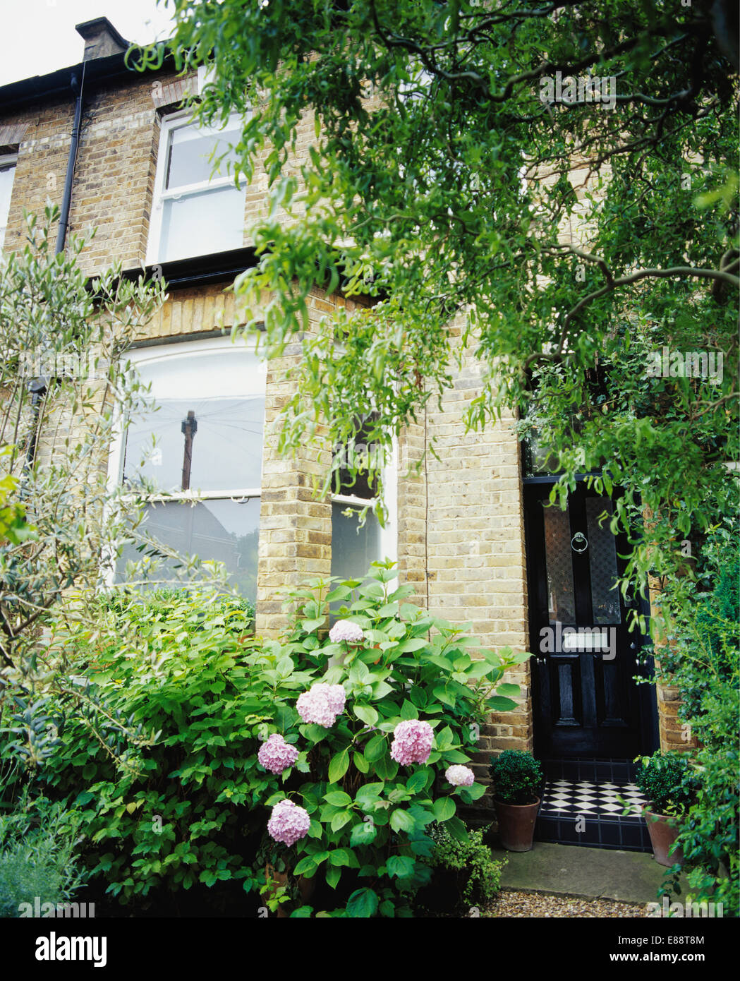 Pink Hydrangea And Tree On Either Side Of Front Door Of Traditional