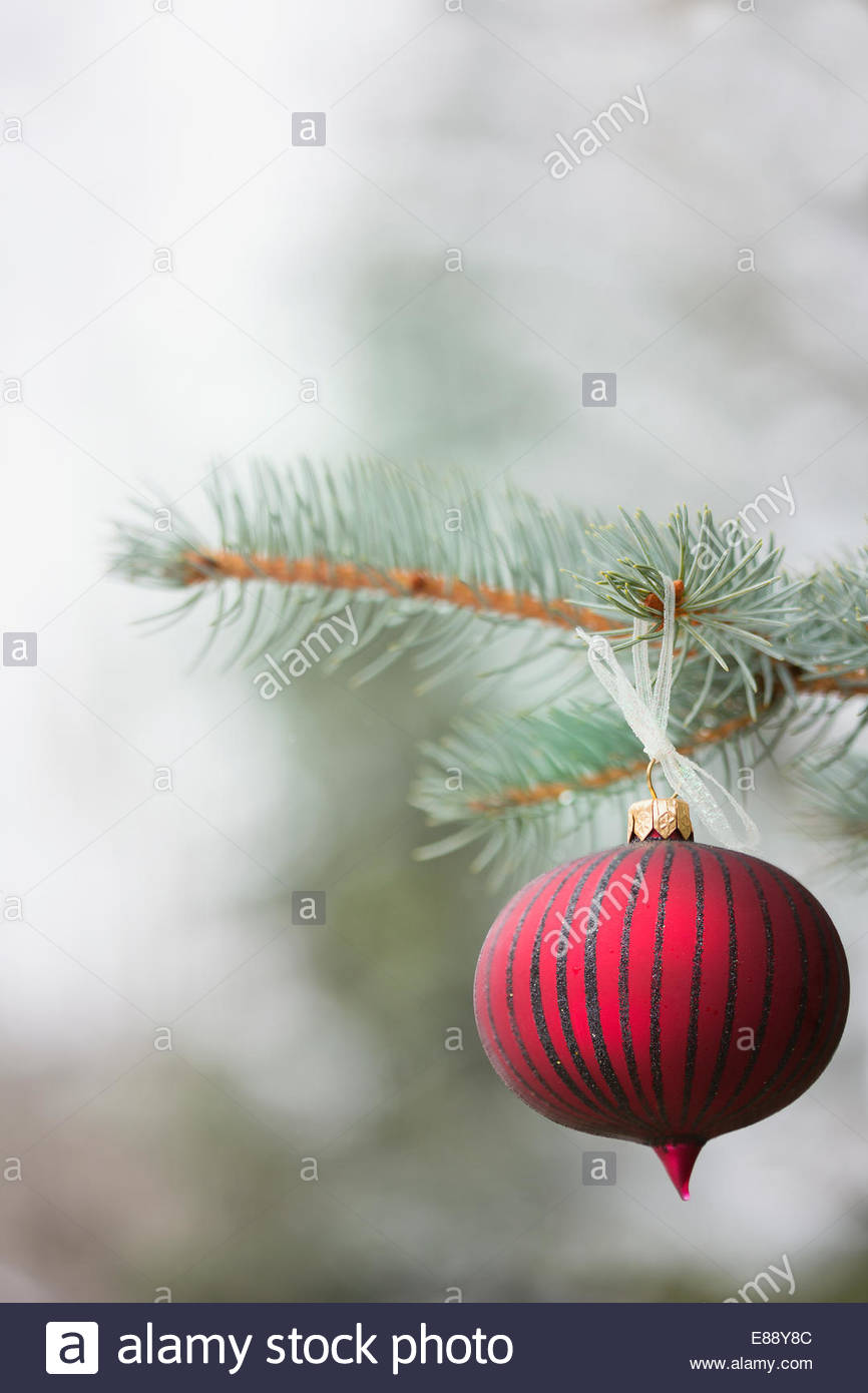 Red ornament hanging from tree branch - Stock Image