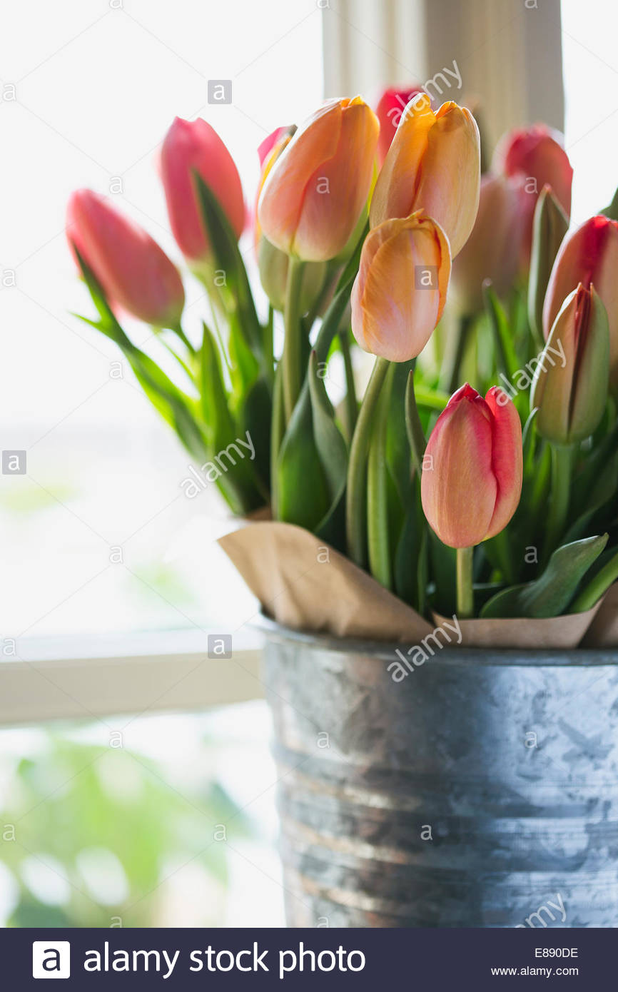 Close up of multicolor tulips in galvanized vase - Stock Image