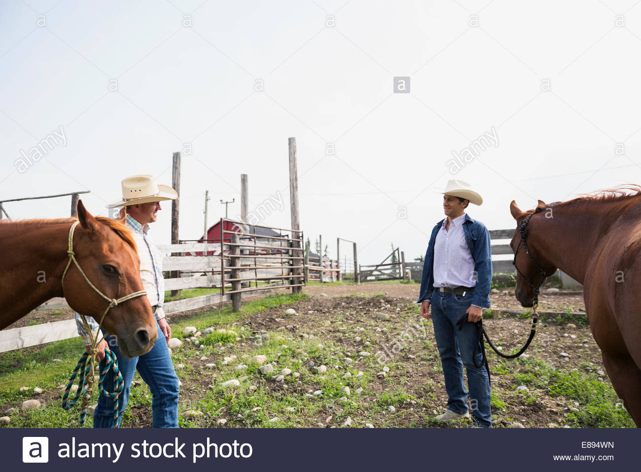 Ranchers with horses talking in pasture - Stock Image