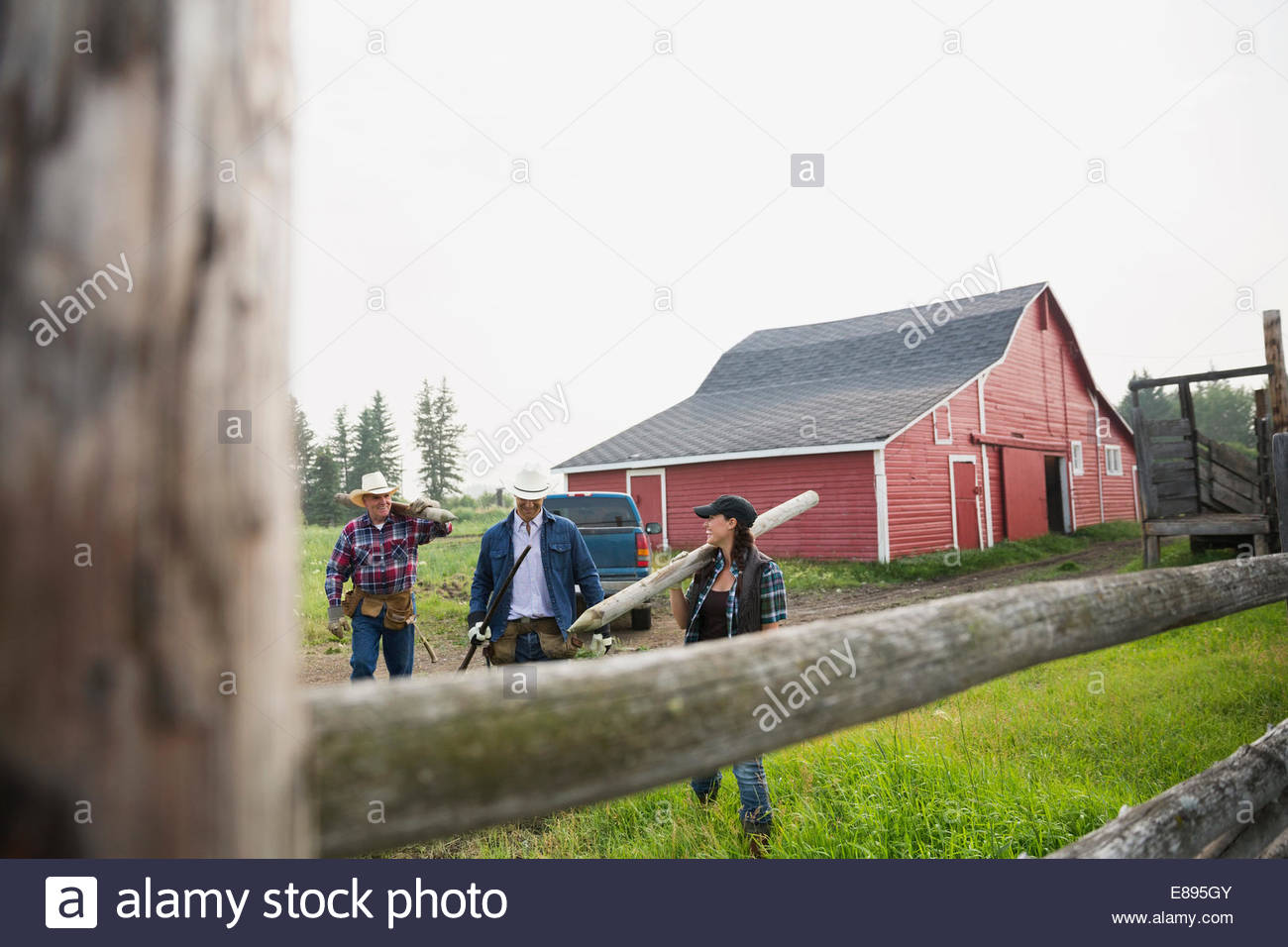 Ranchers carrying fence posts in pasture - Stock Image