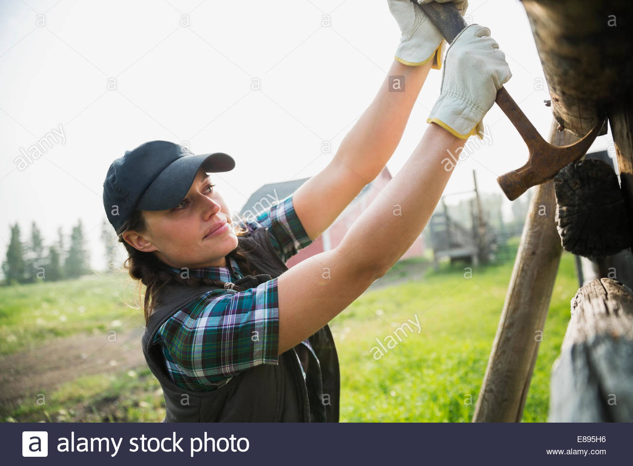 Rancher with hammer replacing fence posts in pasture - Stock Image