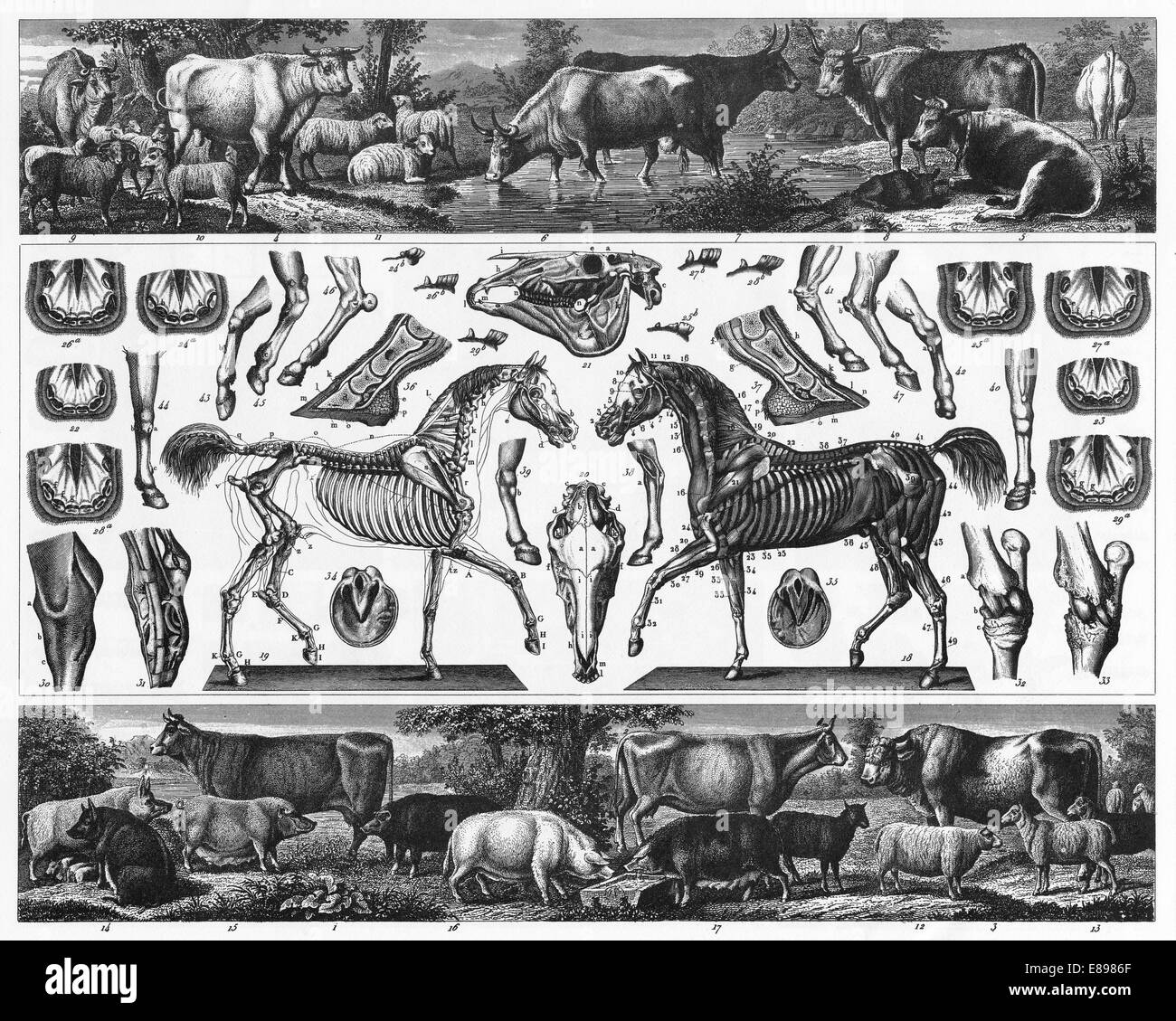 Engraved illustrations of Husbandry from Iconographic Encyclopedia of Science, Literature and Art, Published in - Stock Image