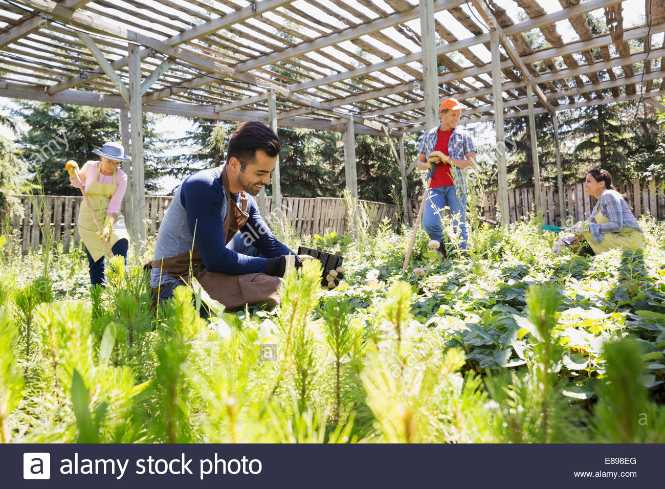 Workers tending to plants at plant nursery Stock Photo